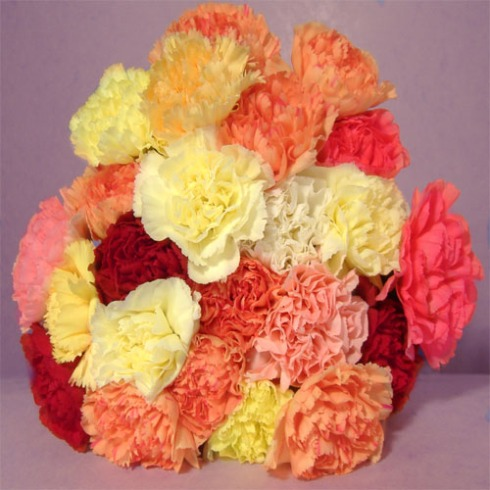 Multi-Colored Carnations